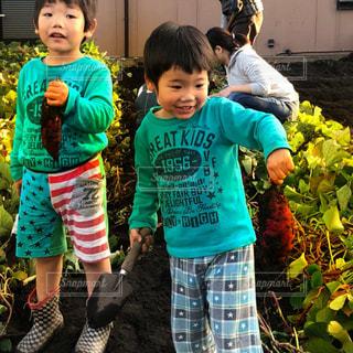 芋掘り - No.1186212