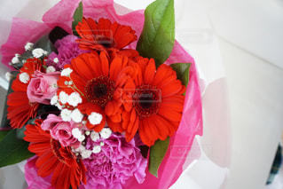 花の写真・画像素材[543053]