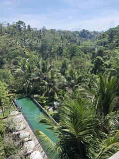海外,プール,グリーン,海外旅行,ジャングル,バリ島,ウブド,バリ