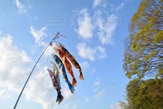空中に凧の飛行の人々 のグループの写真・画像素材[1117424]