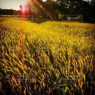 太陽,黄色,日差し,光,イエロー,黄金