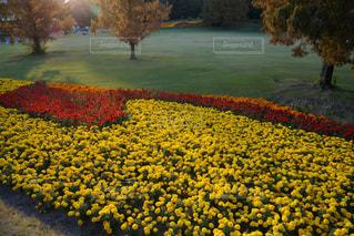 自然,花,春,花畑,屋外,黄色,景色,草,イエロー