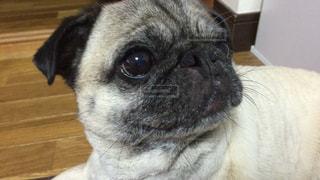犬,動物,横顔,可愛い,目,黒目