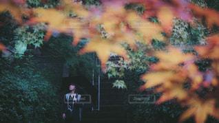 雨の日紅葉狩り - No.782222