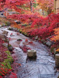 風景,秋,紅葉,京都,観光,永観堂