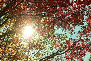 近くの木のアップ - No.845439