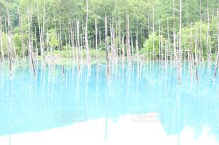木々 に囲まれた水の体 - No.1018454