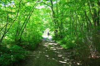 緑豊かな森の真ん中の木の写真・画像素材[1164009]