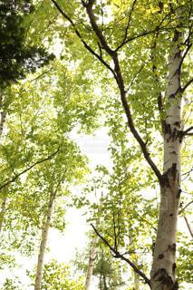フォレスト内のツリー - No.1164014