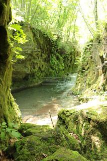森の中の大きな滝 - No.1164015