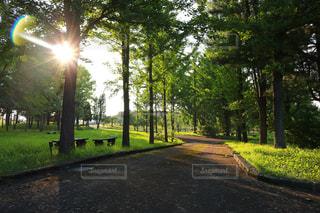 道の端に木のパス - No.1164017