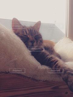 ベッドの上で横になっている猫の写真・画像素材[1279340]