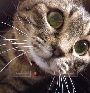 近くにカメラを見て猫のアップの写真・画像素材[1279353]