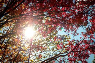 空,秋,紅葉,北海道,秋空