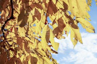 空,秋,黄色,北海道,秋空