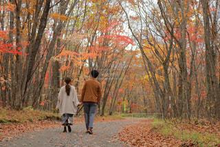 森の横に歩く男の写真・画像素材[1593590]