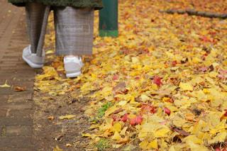 秋の写真・画像素材[1620902]