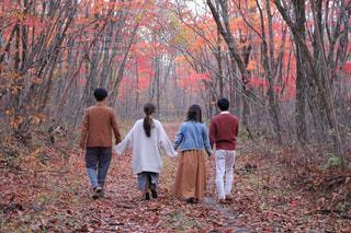 森の人々 のグループの写真・画像素材[1688851]