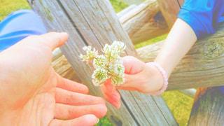 花の写真・画像素材[681552]