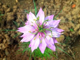 近くの花のアップの写真・画像素材[1036325]