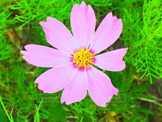 近くの花のアップの写真・画像素材[1036331]