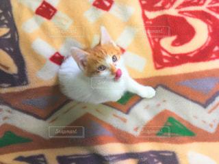 毛布の上に横になっている猫の写真・画像素材[1036337]