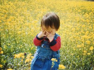 フィールドに黄色の花をはいた男の子の写真・画像素材[1159234]