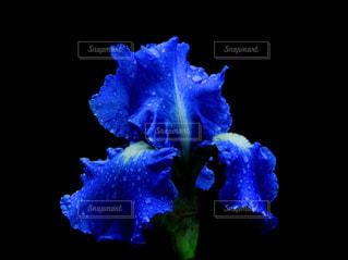 花,雨,綺麗,青,幻想的,暗い,暗闇,雫,梅雨