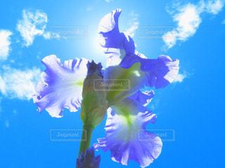 澄んだ青い空を飛んでいる人の写真・画像素材[1408464]