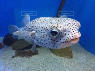 水面下を泳ぐ魚たちの写真・画像素材[746267]