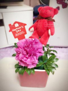 花の写真・画像素材[554959]