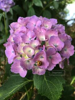 花の写真・画像素材[545919]