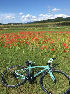 空,花,秋,雲,彼岸花,ロードバイク,秋空,福岡県,遠賀川河川敷