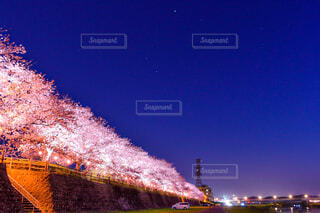 夜桜の写真・画像素材[4273589]