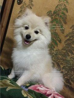 犬の写真・画像素材[16995]