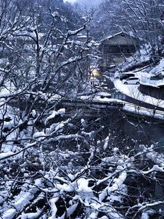 温泉,雪,樹木,花巻温泉