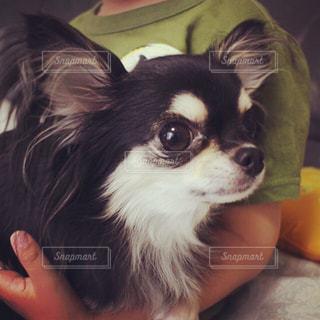 犬 - No.598837