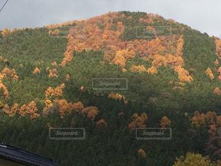 背景の山と木の写真・画像素材[858592]