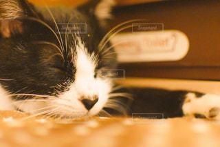 猫のクローズアップの写真・画像素材[2291546]