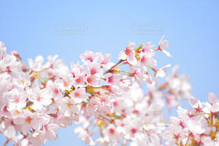 花のクローズアップの写真・画像素材[4318946]
