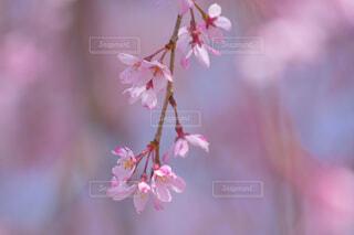 花のクローズアップの写真・画像素材[4318949]