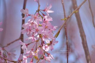 花のクローズアップの写真・画像素材[4318952]