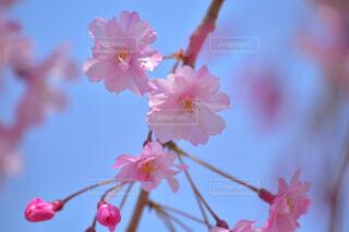 花のクローズアップの写真・画像素材[4318951]