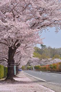 道路の脇に木がある道の写真・画像素材[4318954]