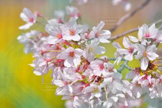 花のクローズアップの写真・画像素材[4318953]