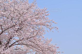 木のクローズアップの写真・画像素材[4319103]