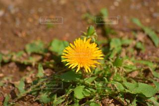 花のクローズアップの写真・画像素材[4319106]