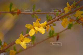 木の枝に花瓶の写真・画像素材[4319104]