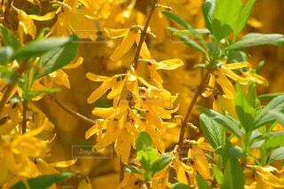 花のクローズアップの写真・画像素材[4319107]