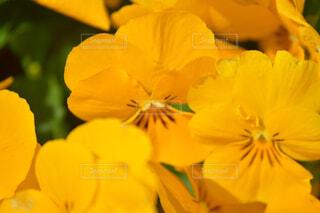 花のクローズアップの写真・画像素材[4319105]
